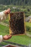 Pszczoła na komórce Fotografia Royalty Free