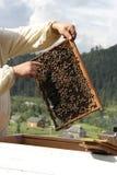 Pszczoła na komórce Zdjęcia Royalty Free