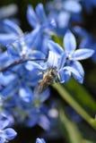 pszczoła ogród Zdjęcia Royalty Free