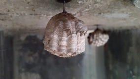Pszczoła rój Fotografia Stock