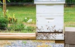 Pszczoła rój Zdjęcia Royalty Free