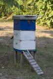 Pszczoła rój Zdjęcia Stock
