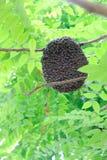 Pszczoła rój na drzewie Fotografia Stock