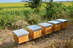 Pszczoła roje Zdjęcie Stock