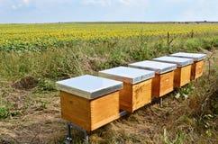 Pszczoła roje Obrazy Stock