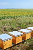 Pszczoła roje Fotografia Stock