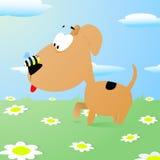 Pszczoła siedzi na psa nosie Zdjęcie Stock