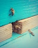 Pszczoły blisko roju Fotografia Stock
