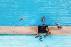 Pszczoły blisko ula Obraz Royalty Free