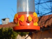 Pszczoły karmi przed hummingbird Zdjęcia Stock