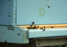 Pszczo?y lataj? r?j beekeeping Mrowie pszczoły przynosi miodu dom pasieka obrazy stock