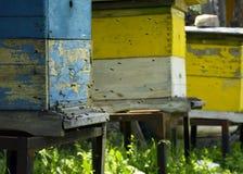 Pszczo?y lataj? r?j beekeeping Mrowie pszczoły przynosi miodu dom pasieka zdjęcia stock