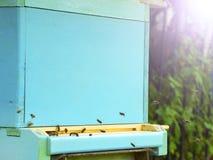 Pszczo?y lataj? r?j beekeeping Mrowie pszczoły przynosi miodu dom pasieka obraz royalty free