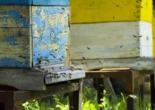 Pszczo?y lataj? r?j beekeeping Mrowie pszczoły przynosi miodu dom pasieka fotografia royalty free