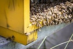 Pszczoły na honeycells Zdjęcia Stock
