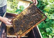 Pszczoły na honeycombs Fotografia Royalty Free