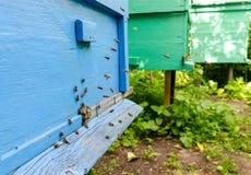 Pszczoły na pasiece Zdjęcie Royalty Free