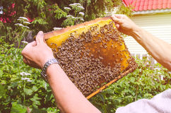 Pszczoły na ramie, pogodnej Obraz Royalty Free