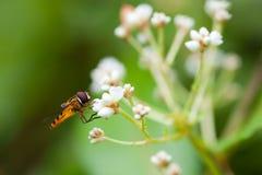 pszczoły praca Obraz Royalty Free