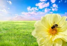 pszczoły praca Zdjęcie Stock