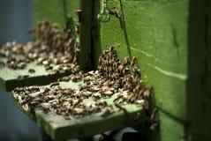 pszczoły ruchliwie Fotografia Stock
