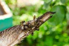 Pszczoły w pasiece Obraz Royalty Free