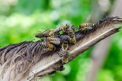 Pszczoły w pasiece na zieleni Zdjęcie Stock
