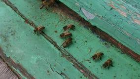 Pszczoły w roju Zdjęcie Stock