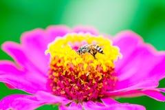Pszczoły znaleziska cukierki woda Zdjęcia Stock