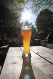 pszenica piwa Zdjęcia Royalty Free