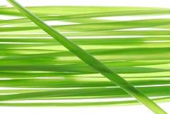 pszenica słomiana Obrazy Stock