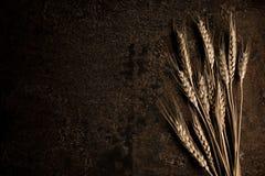 pszenica złota Obrazy Royalty Free