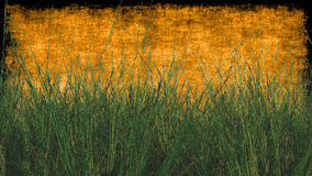 Pszeniczna trawa z Textured tłem w pomarańcze Zdjęcia Royalty Free