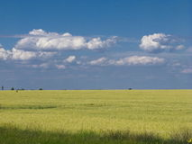 Pszenicznego pola niebieskie niebo Zdjęcie Royalty Free