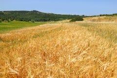 Rolnictwo pastoralny Zdjęcia Stock