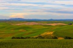 Pszeniczni pola i góry w tle obraz royalty free