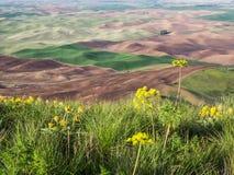 Pszeniczni pola obrysowywają Palouse wzgórza Fotografia Stock