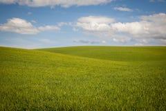 Pszeniczni pola pod latem chmurnieją Obrazy Stock
