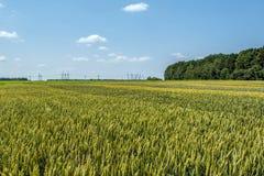 Pszeniczni ucho adra, pełno, na polu przeciw niebu i inny, rośliny Obrazy Stock