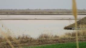 Pszeniczny badyl i jezioro zdjęcie wideo