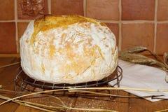 Pszeniczny chleb Zdjęcia Stock