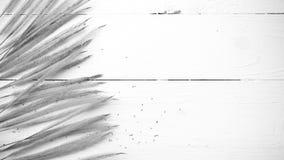 Pszeniczny czarny i biały kolor Zdjęcie Stock