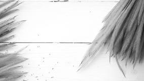 Pszeniczny czarny i biały kolor Obraz Royalty Free