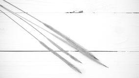 Pszeniczny czarny i biały kolor Fotografia Stock