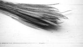 Pszeniczny czarny i biały kolor Zdjęcia Stock