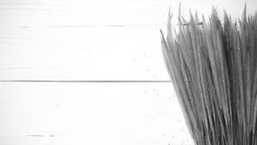 Pszeniczny czarny i biały kolor Zdjęcie Royalty Free