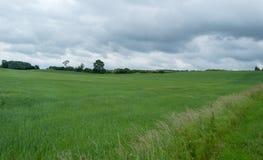 Pszeniczny pole na chmurzącym dniu obraz stock