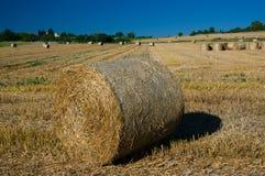 Pszeniczny pole po żniwa Zdjęcie Royalty Free