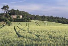 Pszeniczny pole, południowy Francja fotografia stock