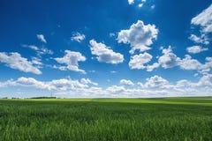 Pszeniczny pole przeciw niebieskiemu niebu z białymi chmurami Rolnictwo scen Fotografia Stock